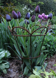 Tulip Basket (see photo right)