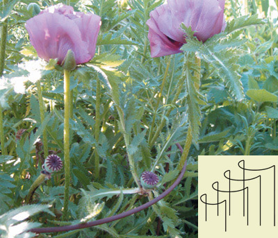 Herbaceous Plant Supports <span>(see photo right)</span>